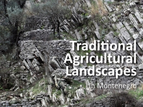 Traditional agricultural landscapes