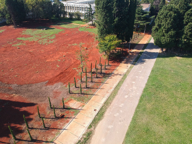 New cypress trees planted in October 2019. Photo: Goran Bulatović